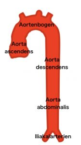 Abschnitte der Aorta